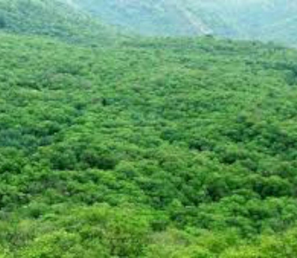 वन निगममा 'सिइओ' नियुक्ति प्रक्रिया प्रारम्भ