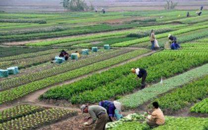 नुवाकाेटमा व्यावसायिक कृषि फार्म सञ्चालनमा