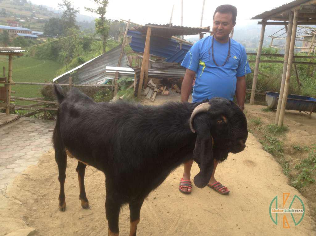 lokendra_dhan_kheti (2)