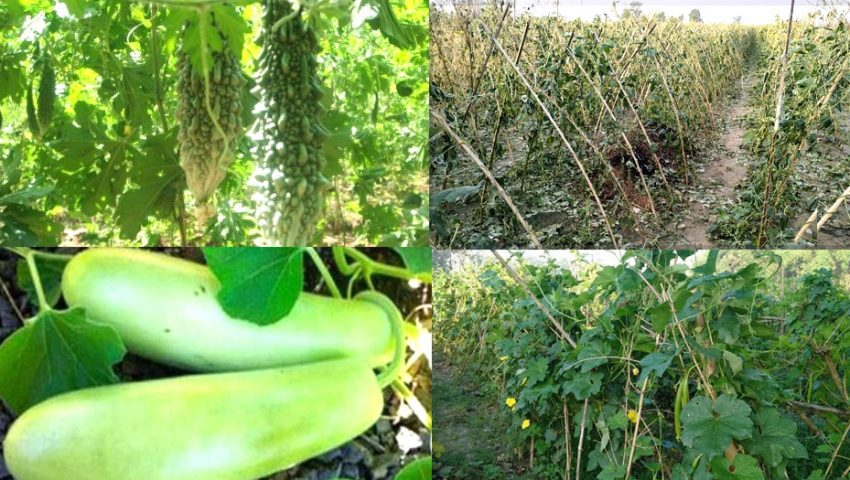 tarkari_vegetable