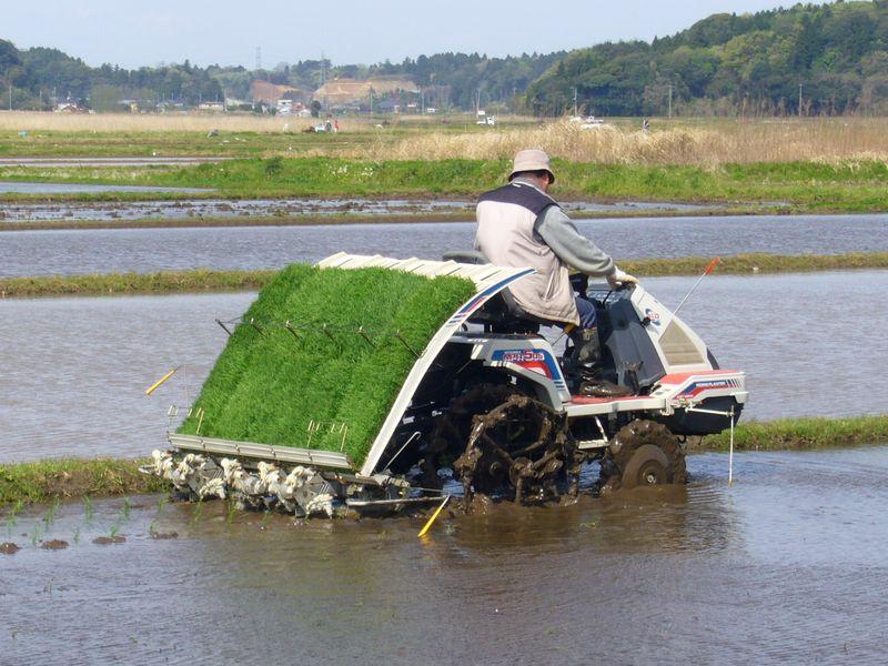 Rice-planting-machine_dhan_ropai_800x600