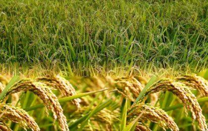 कृषिको आधुनिकीकरणमार्फत समृद्धि खोज्दै युवा