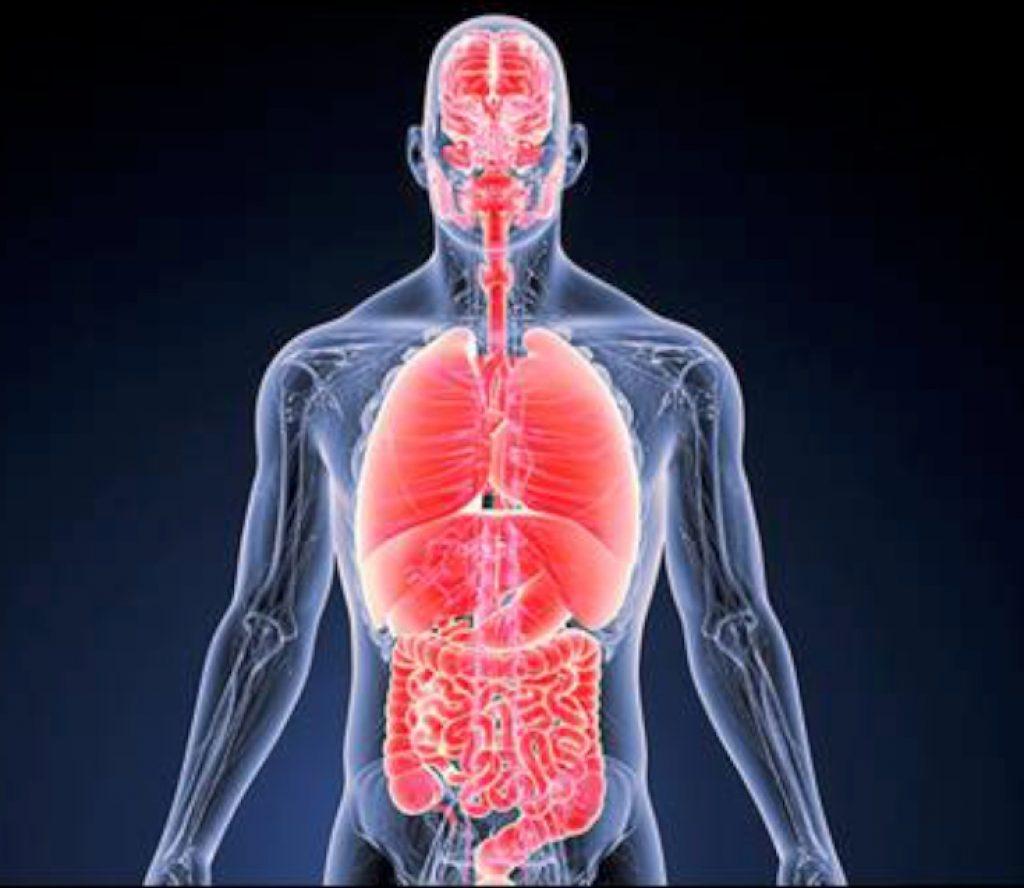 मानव शरीरमा एक सय ७ मर्मस्थान, जहाँ आघात पुगे निधन हुनसक्छ