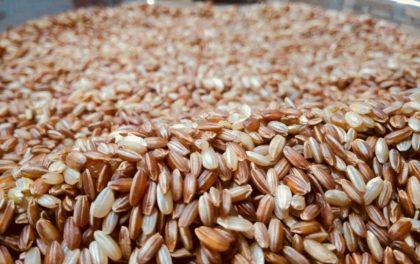 मार्सी चामलका बारेमा ७ तथ्य : किन खाने मार्सी भात !