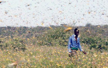 फट्यांग्राकाे बिगबिगी बढेपछि सोमालियामा संकटकाल घोषणा