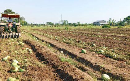बंगलादेशबाट पैंचो मागेको मल किनेर ल्याउन पनि अलमल, बजार नपाएर फलफूल र तरकारी खेतीमा ट्याक्टर